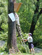 Woodpecker box with shield being installed.