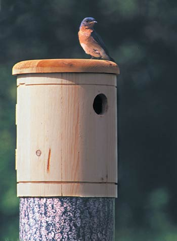 Bluebird Log Nest Box