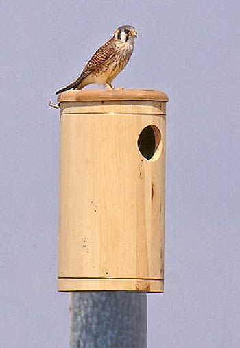 Kestrel / Sparrow Hawk Nest Box