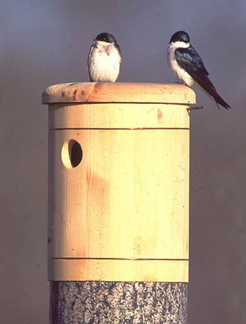 Tree Swallow Hollow Nest Box